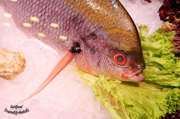 fish_house19
