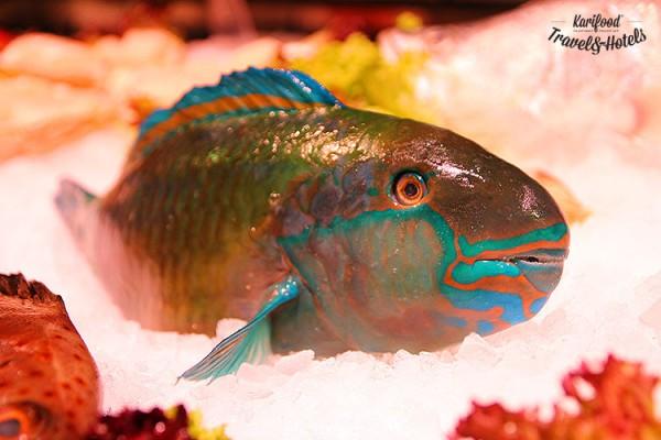 fish_house47
