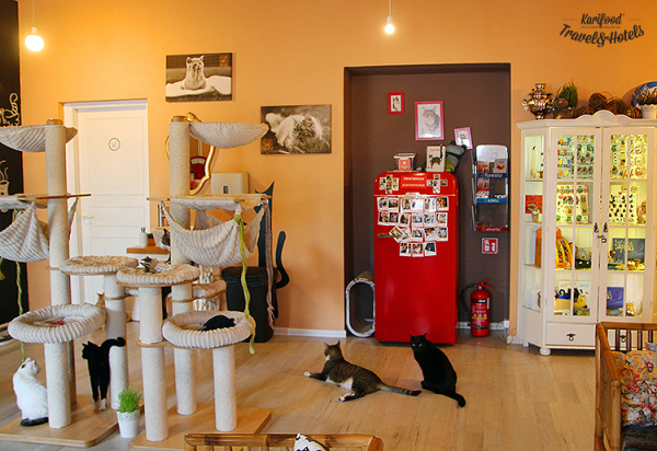 catcafe28