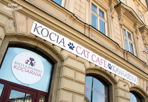 catcafe9